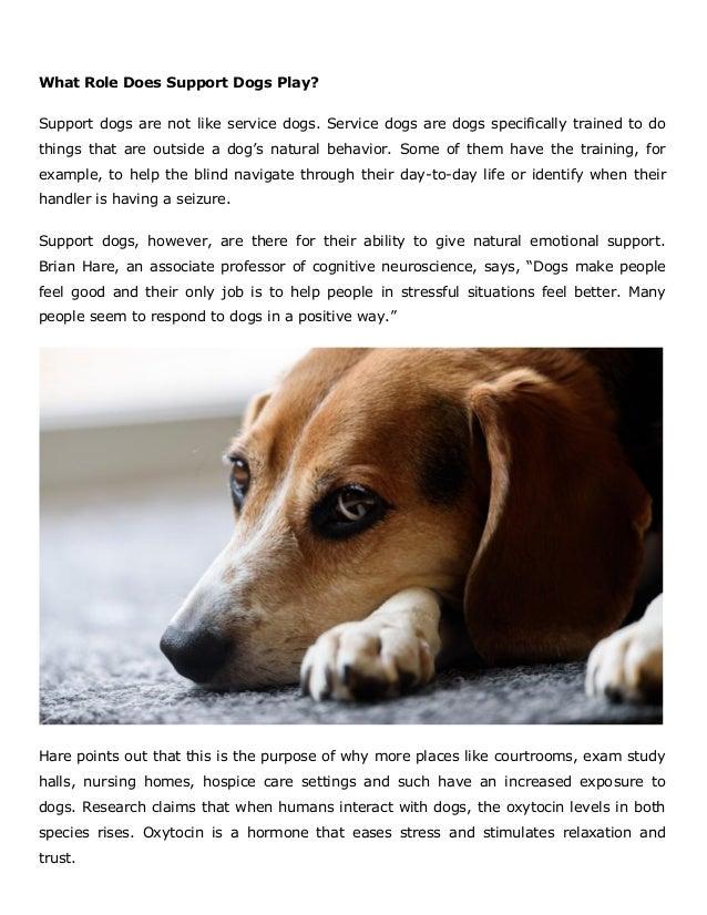 What Does A Dog Seizure Feel Like