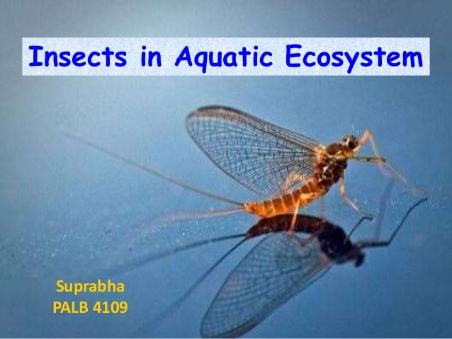 types of aquatic ecosystem pdf