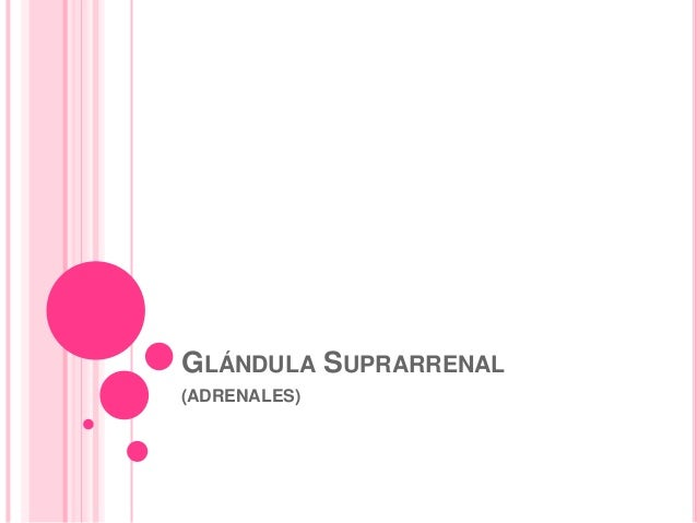 GLÁNDULA SUPRARRENAL(ADRENALES)