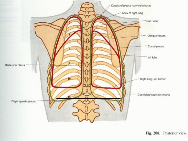 Surface Anatomy Of Back