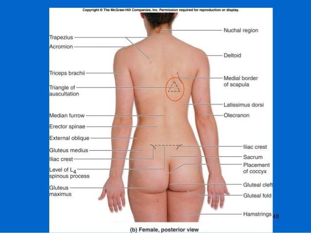Surface Anatomy Of Back
