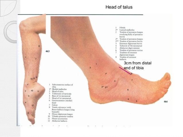 Anatomical Foot Surfaces Diagram Diy Enthusiasts Wiring Diagrams