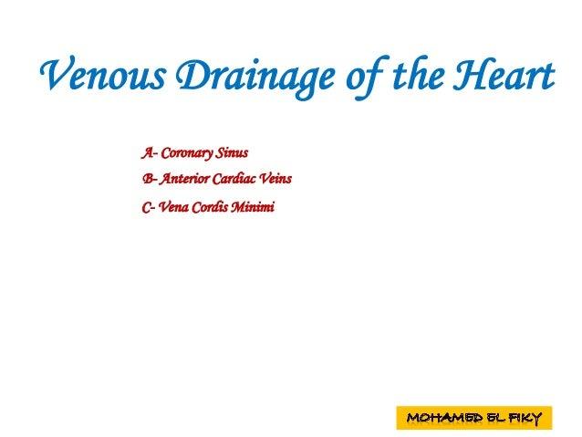 Venous Drainage of the Heart A- Coronary Sinus B- Anterior Cardiac Veins C- Vena Cordis Minimi