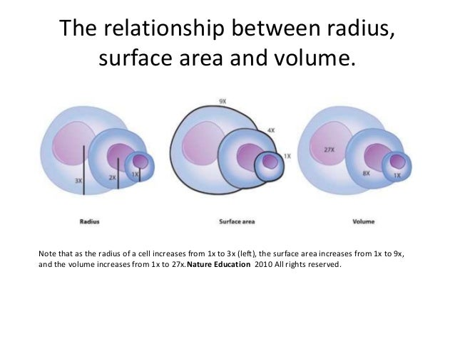 surface area and diffusion relationship tips
