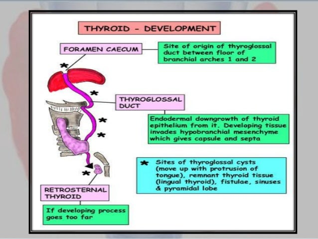Operations on the thyroid gland: indications, types