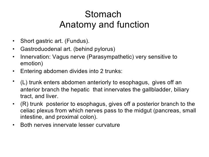 Surgery stomach duodenum tg stomach anatomy ccuart Images