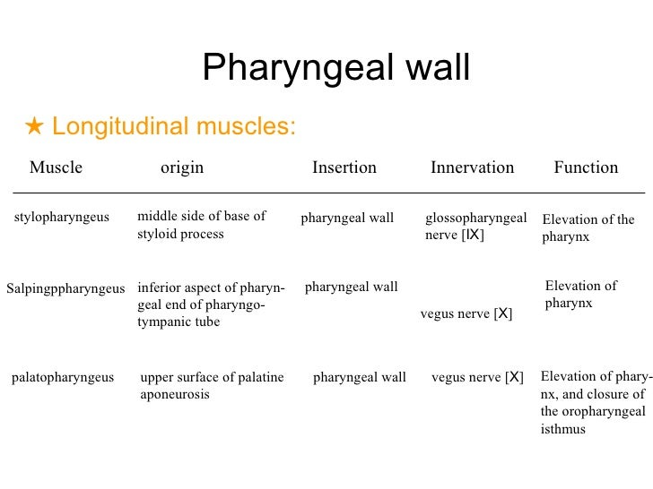 Surgical Anatomy And Physiology Of Pharynx