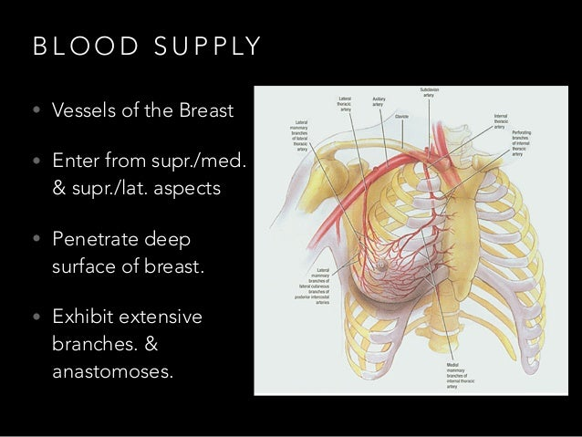 Surgical Anatomy Of Breasts
