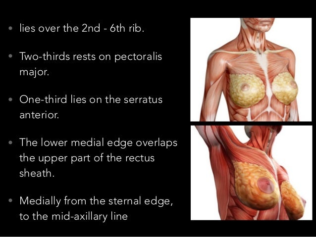 Surgical anatomy of breasts Slide 3