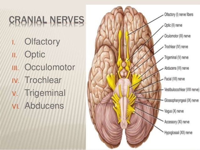 Surgical anatomy of cranial nerves pallav