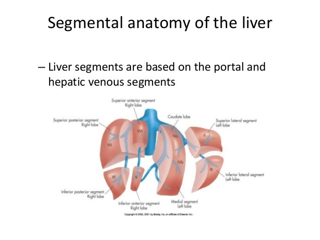 Surgical Anatomy Of Liver