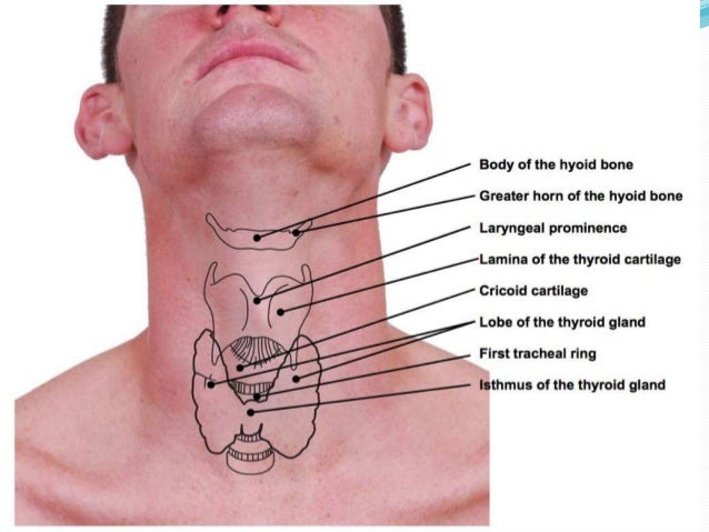 surgical anatomy of neck, Human Body