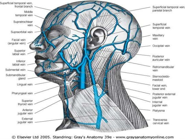 Surgical anatomy of neck
