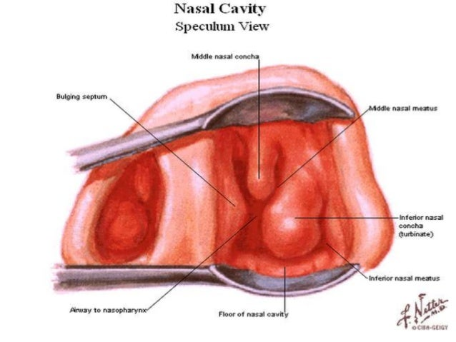 Surgical anatomy of nose MAH