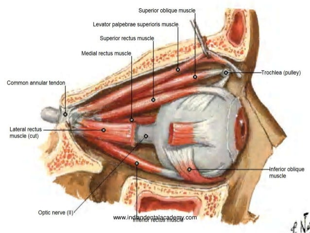 Surgical anatomy course