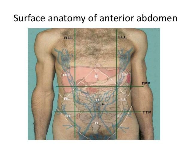 Surface Anatomy Diagram Of Abdomen - Electrical Work Wiring Diagram •