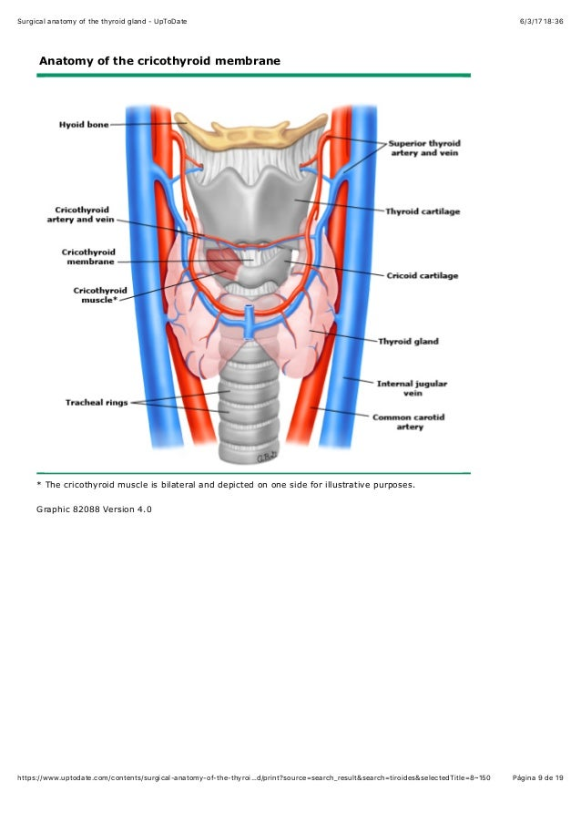 Surgical anatomy of the thyroid gland up todate