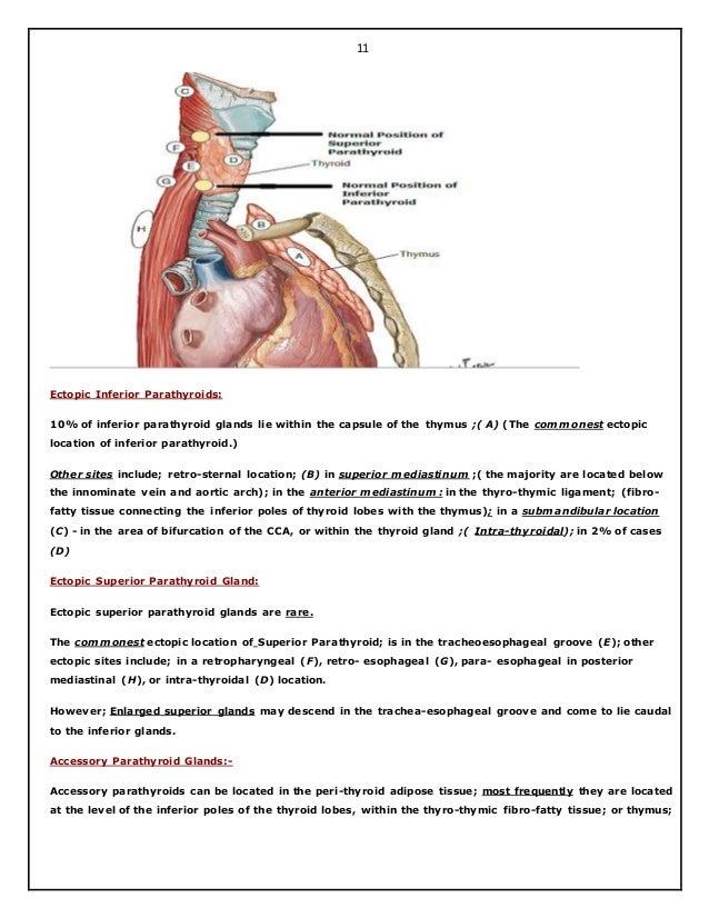 Surgical Anatomy Of Thyroid And Para Thyroid Glands Hazem El Folldocx