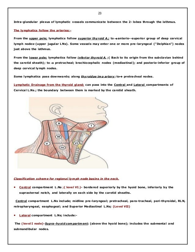 Thyroid surgical anatomy