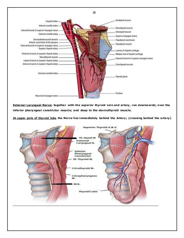 Moderno Thyroid Surgery Anatomy Imagen - Imágenes de Anatomía Humana ...