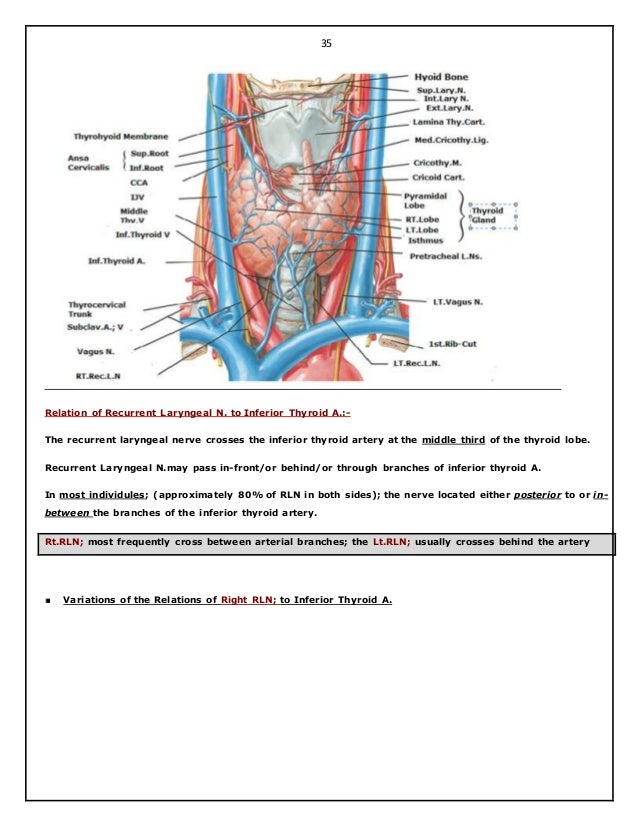 Surgical anatomy of thyroid and para thyroid glands. hazem el-folldocx