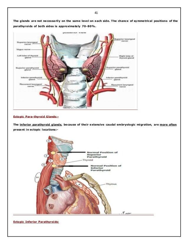 Surgical anatomy of thyroid and para thyroid glands. hazem el-folldocx