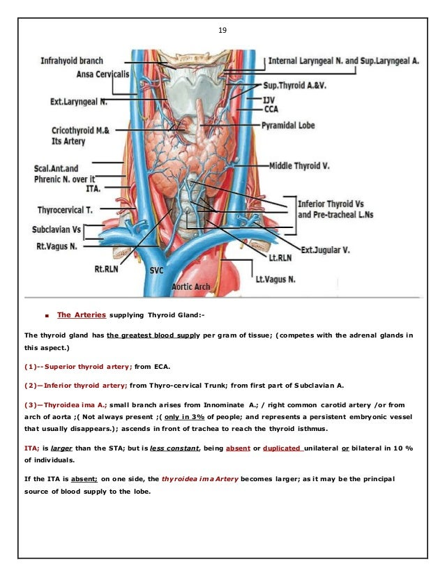 Surgical anatomy of thyroid and parathyroid glands. hazem el folldocx
