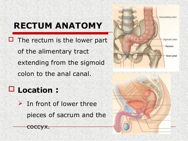 Surgical rectal anatomy