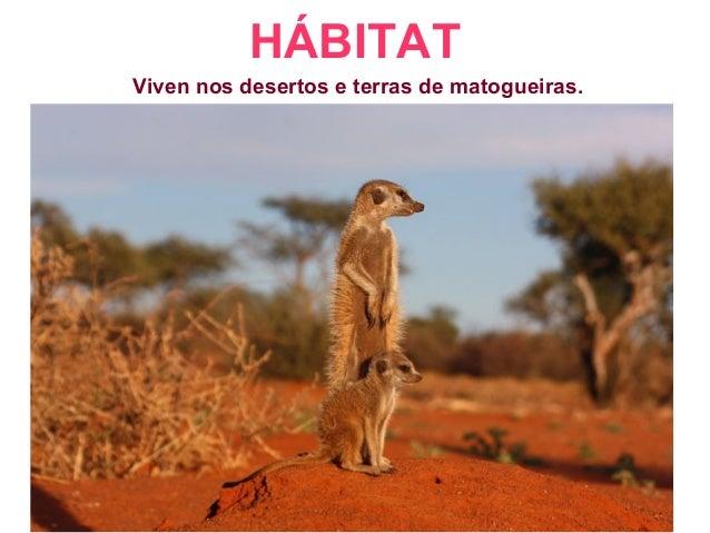 HÁBITAT Viven nos desertos e terras de matogueiras.