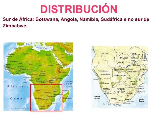 DISTRIBUCIÓN Sur de África: Botswana, Angola, Namibia, Sudáfrica e no sur de Zimbabwe.