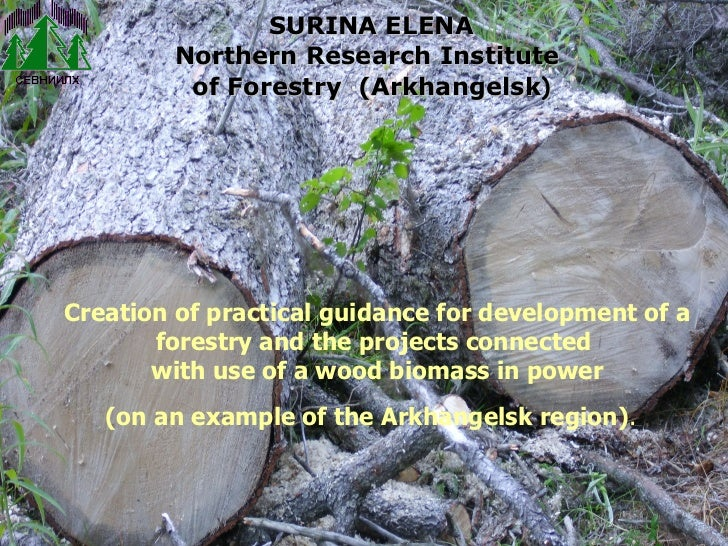 Creation of practical guidance for development of a forestry and the projects connected  with use of a wood biomass in pow...