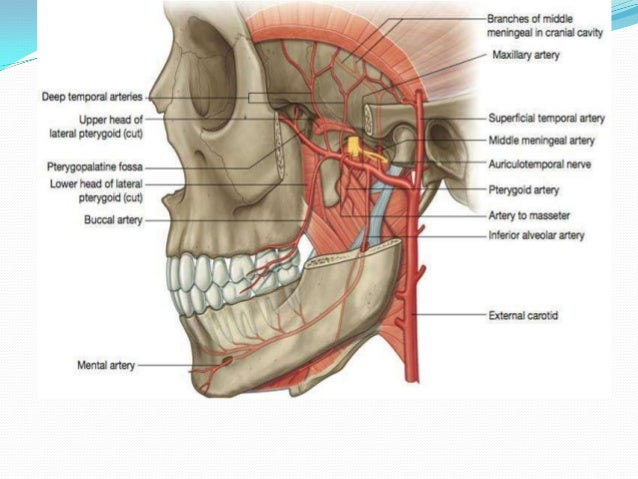 Surgical Anatomy Of Tmj