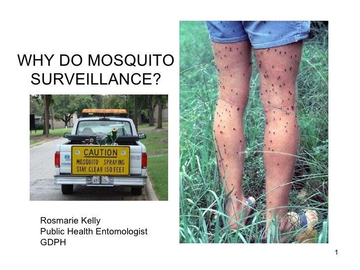 WHY DO MOSQUITO SURVEILLANCE? Rosmarie Kelly Public Health Entomologist GDPH
