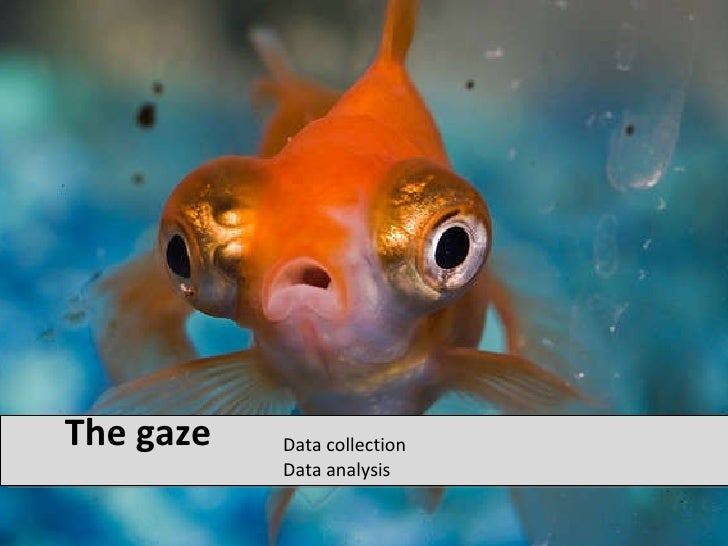 The gaze <ul><li>Data collection Data analysis </li></ul>