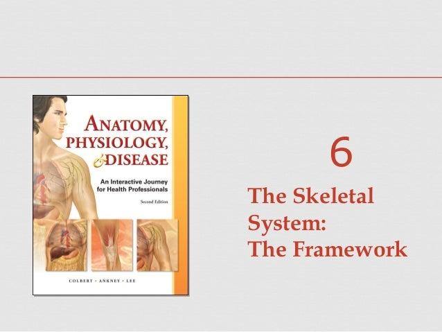 The Skeletal System: The Framework 6