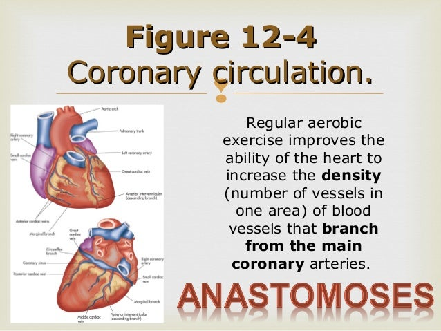 exercise 32 anatomy of blood vessels Document directory database online answers to review sheet exercise 32 anatomy of blood vessels answers to review sheet exercise 32 anatomy of blood vessels - in this site is not the thesame as a answer.