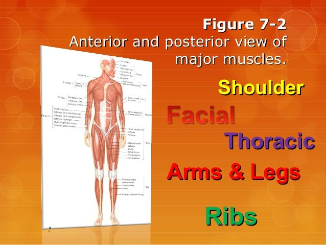 Survey of Anatomy and Physiology Chap 7