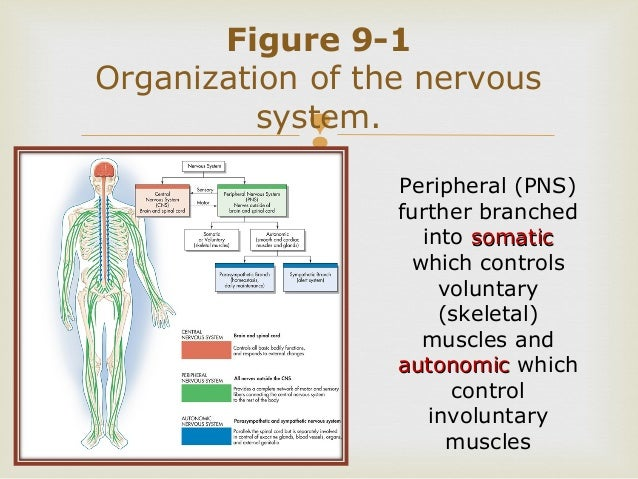 Survey Of Anatomy And Physiology Chap 9 Part One