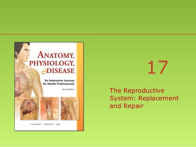 17 The Reproductive System: Replacement and Repair