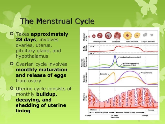 Difference Between Ovarian Cycle and Menstrual Cycle