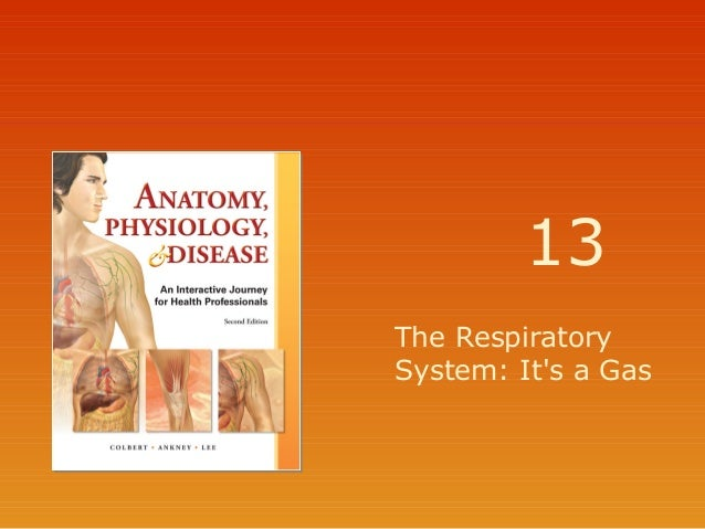 13 The Respiratory System: It's a Gas