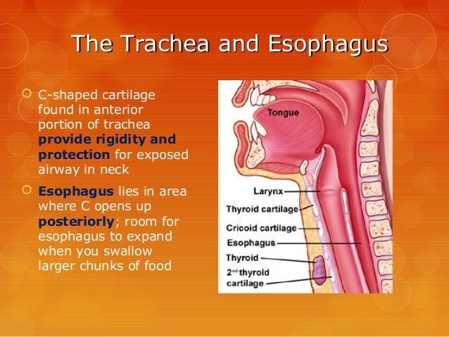 Survey of Anatomy & Physiology Chap 13
