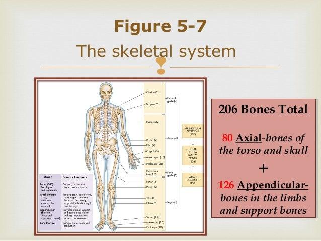 Survey of anatomy & physiology chap 5