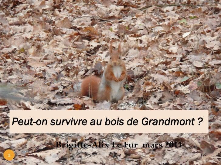 Survivre dans le bois de grandmont