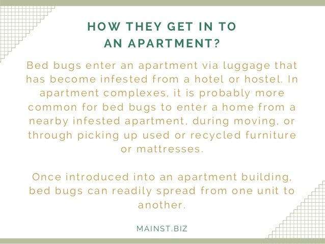 Apartment Building Has Bed Bugs plain apartment building has bed bugs a throughout decor
