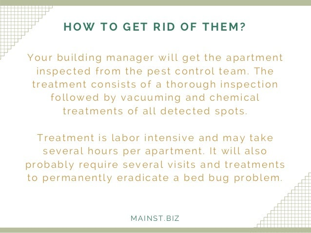 Apartment Building Has Bed Bugs delighful apartment building bed bugs hiding places r for design
