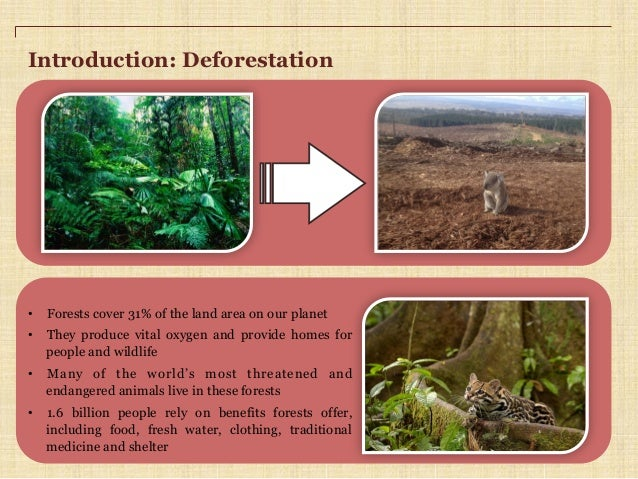 Deforestation speech introduction