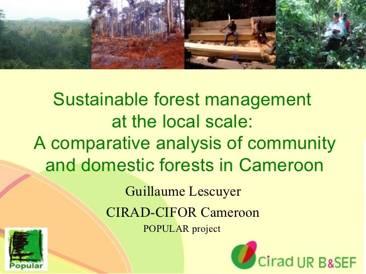 Sustainable Forest Management ~ Sustainable forest management at the local scale a