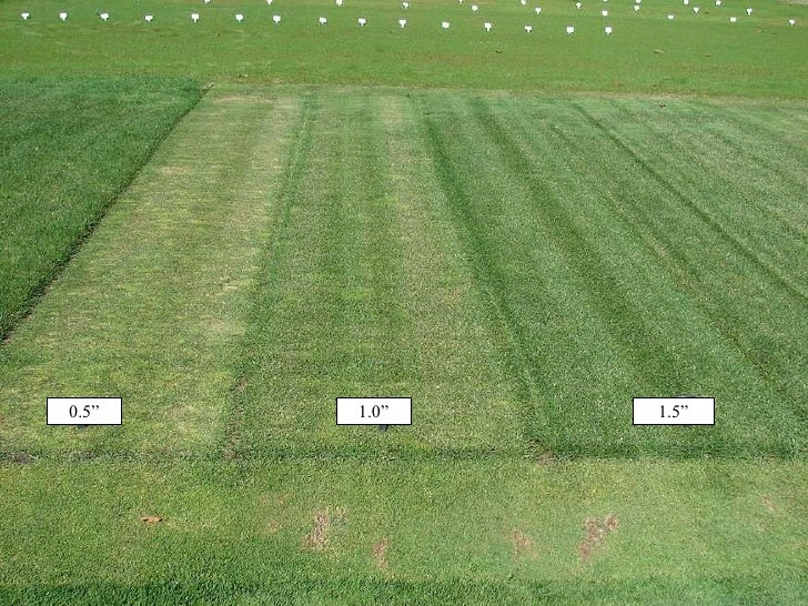 Image Result For Lawn Maintenance Schedule
