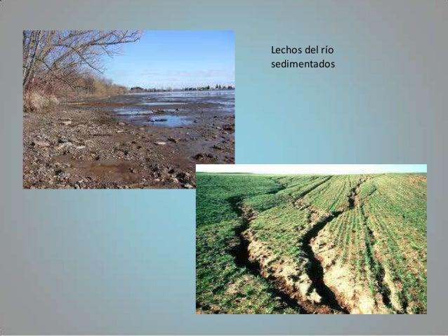Lechos del ríosedimentados